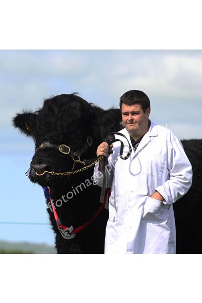 Llandysul Show 2015 - bull and handler