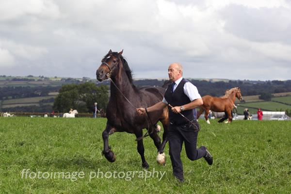 Llandysul Show 2015 - horse